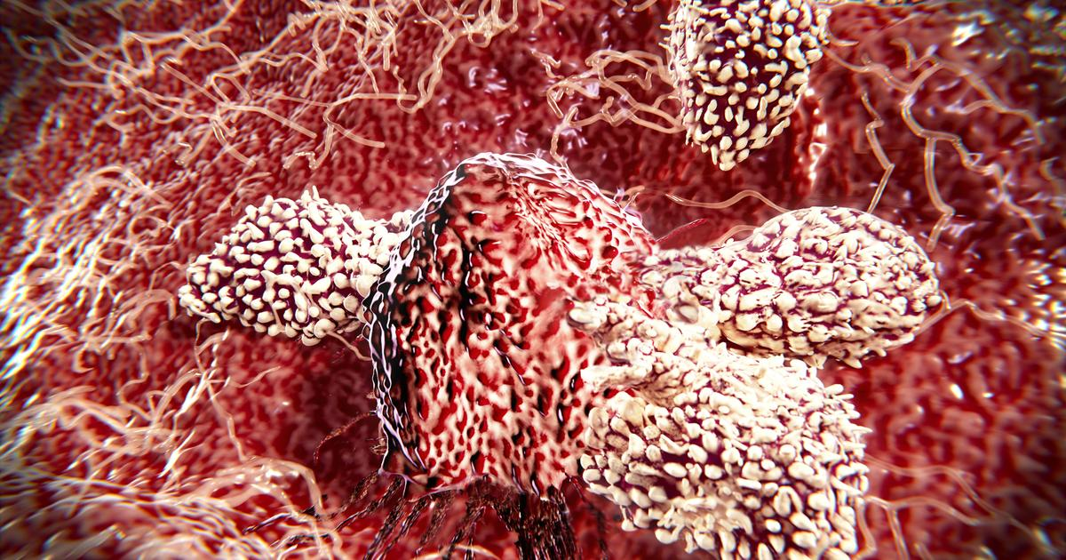 Newly discovered immune cell points to universal cancer treatment