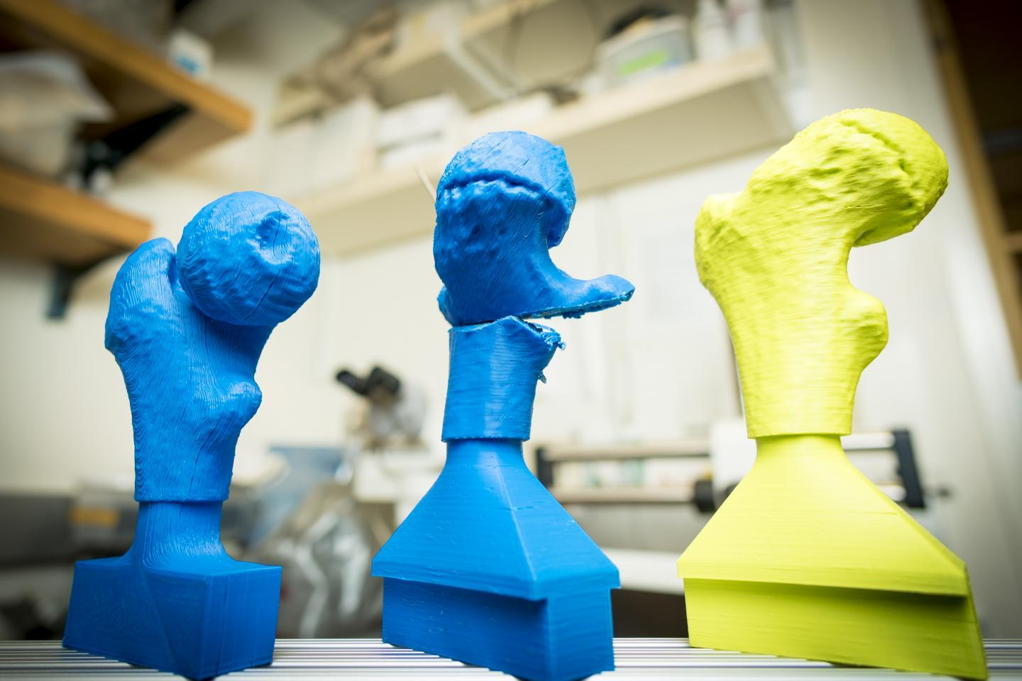Some of the 3D-printed models used in the study