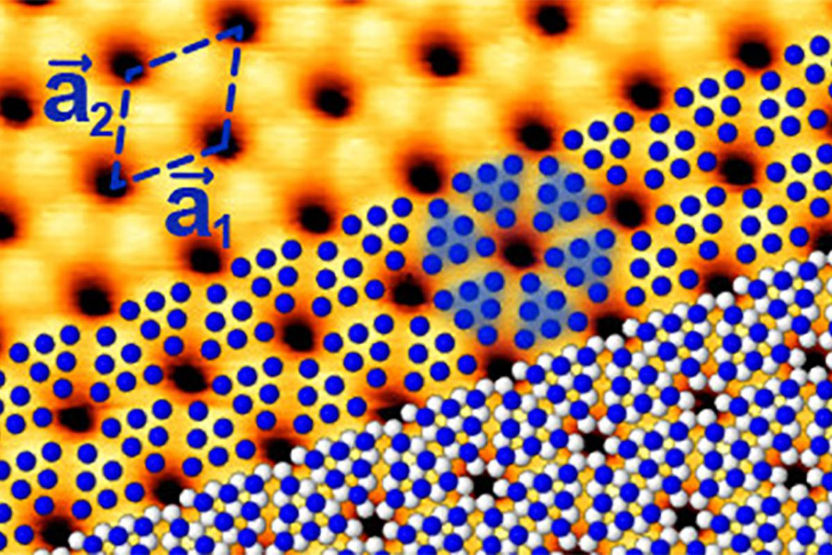 In blue phosphorus, the atoms arrange themselves in a honeycomb pattern like graphene, but buckled, thanks to the shape of the gold substrate underneath
