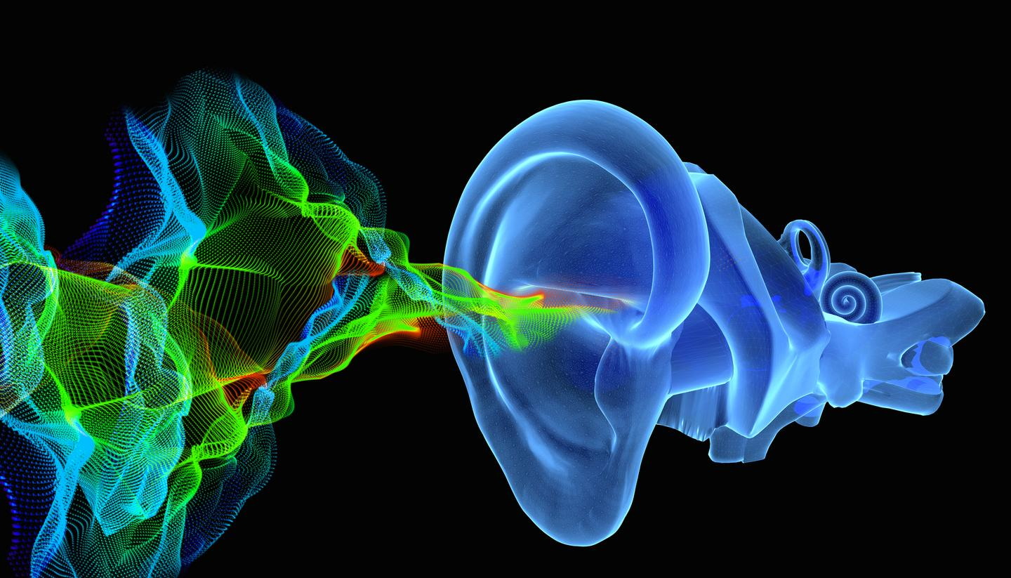 Scientists have gained a new, atomic-level understanding of ear filaments that are key to turning vibrations into signals that we interpret as sound