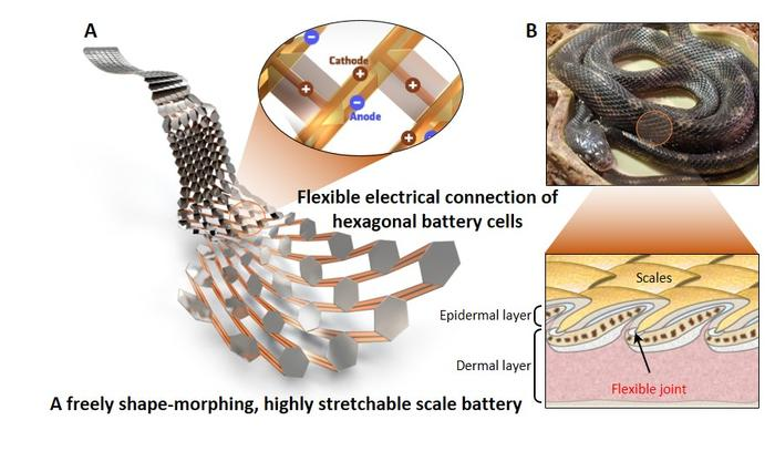 A stretchable lithium battery modeled on snakeskin maintains its performance even when bent and stretched out of shape