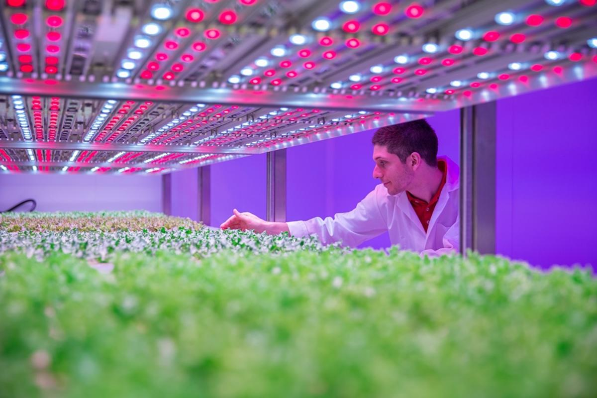 "The aim of the Philips GrowWise City Farming research center is to develop technology to ""grow tasty, healthy and sustainable food virtually anywhere"""