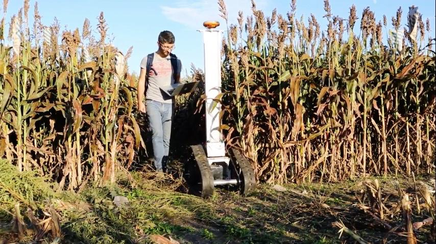 The Crop Phenotyping Robot inspects a sorghum crop