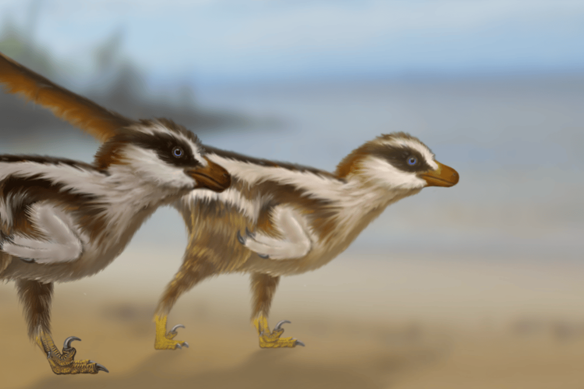 A recreation of Dromaeosauriformipes rarus, the tiny new raptor species that's thought to be responsible for the world's smallest dinosaur footprints