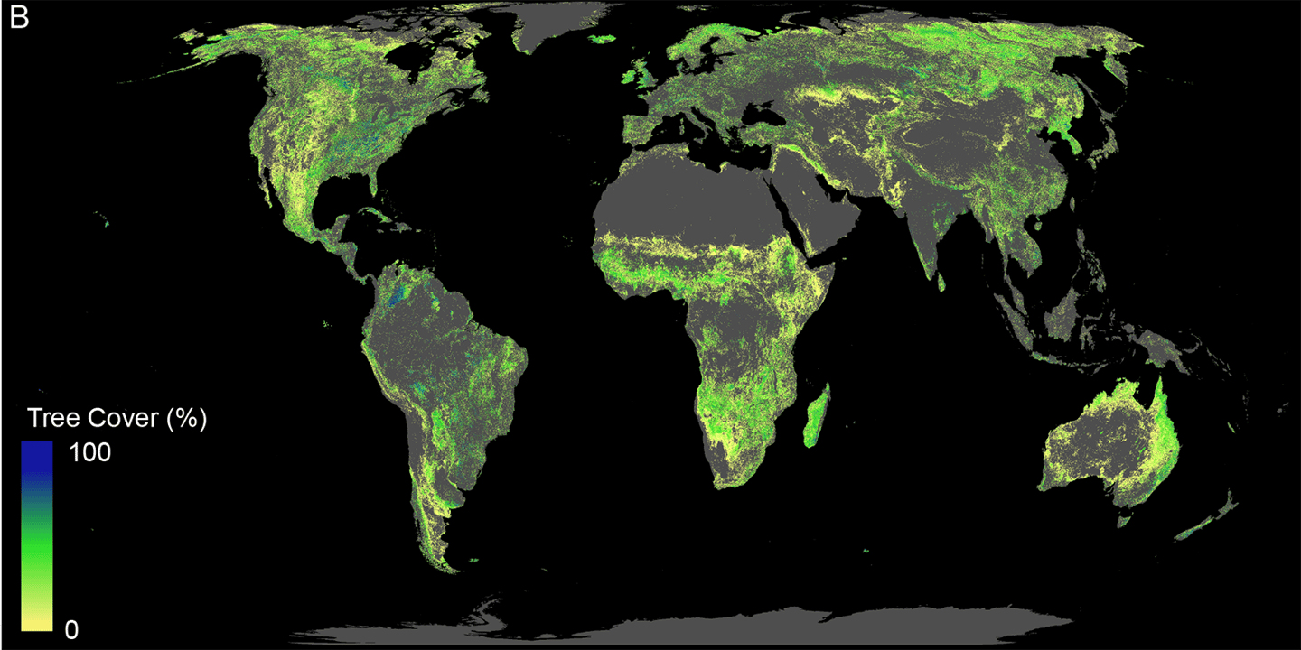 This chart shows the total land available that can support trees, including what's currently covered with trees and what could be reforested in future