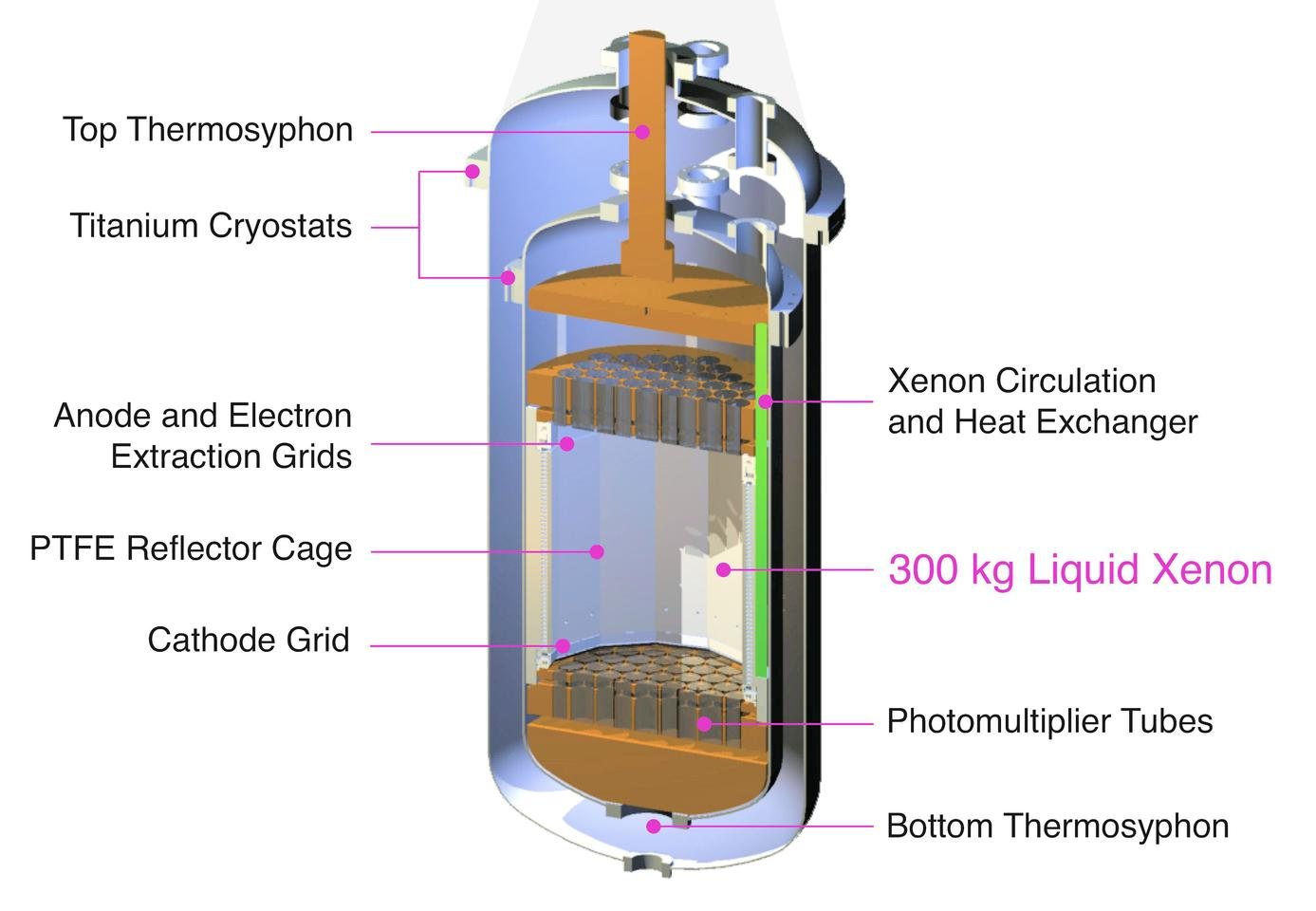 A cross-sectional view of the LUX dark matter detector (Image: LUX)