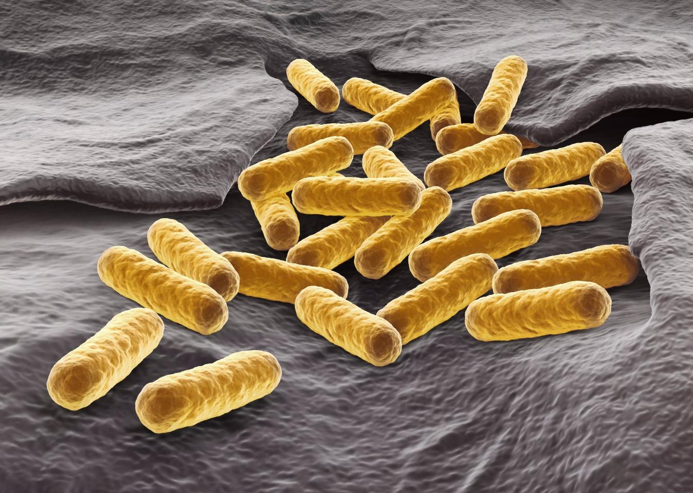 Early tests using the nanoparticles to tackle antibiotic-resistant bacteria, such as E. Coli (pictured), were successful, killing off 92 percent of the target cells