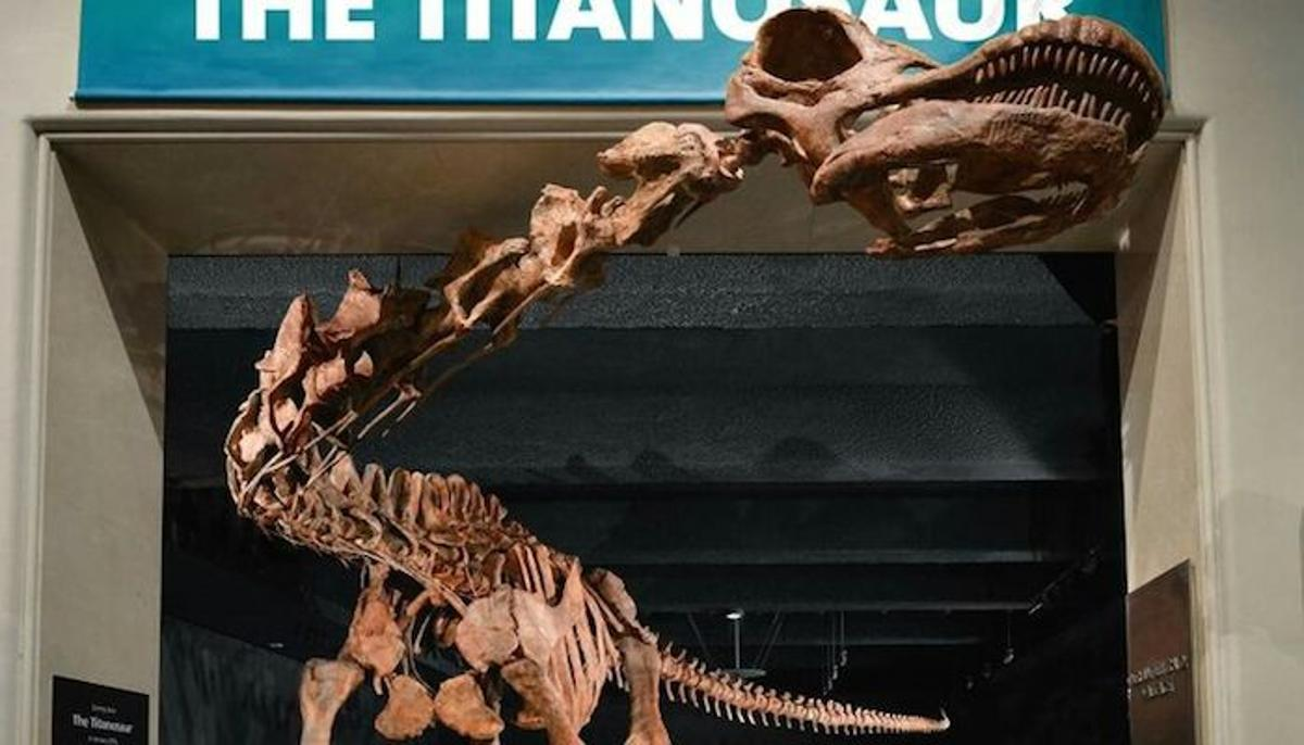 A replica of the Patagotitan mayorum, the largest land animal to ever walk the Earth, is on display at the American Natural History Museum