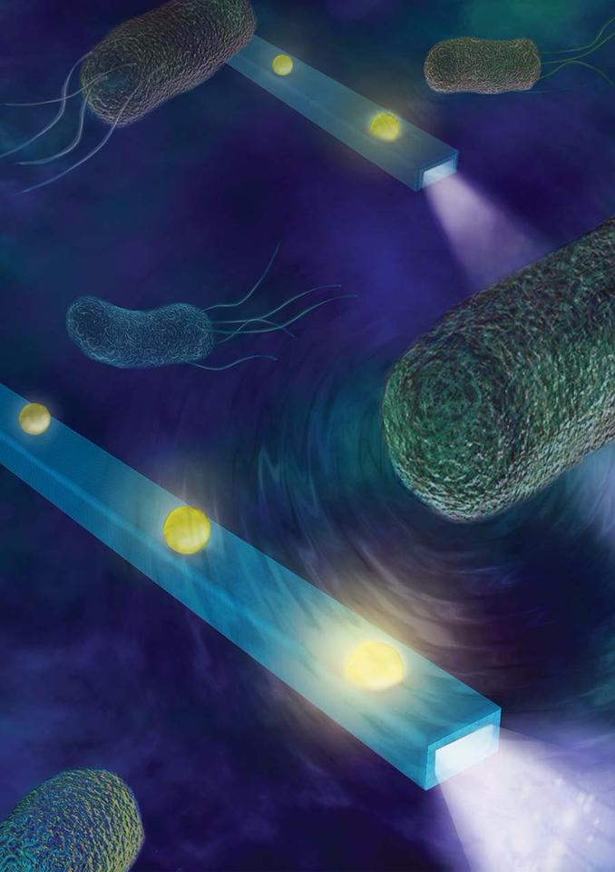 Thenano-scale optic fiber detectorcan listen in on the sounds of individual cells or feel the minute forces produced byswimming bacteria