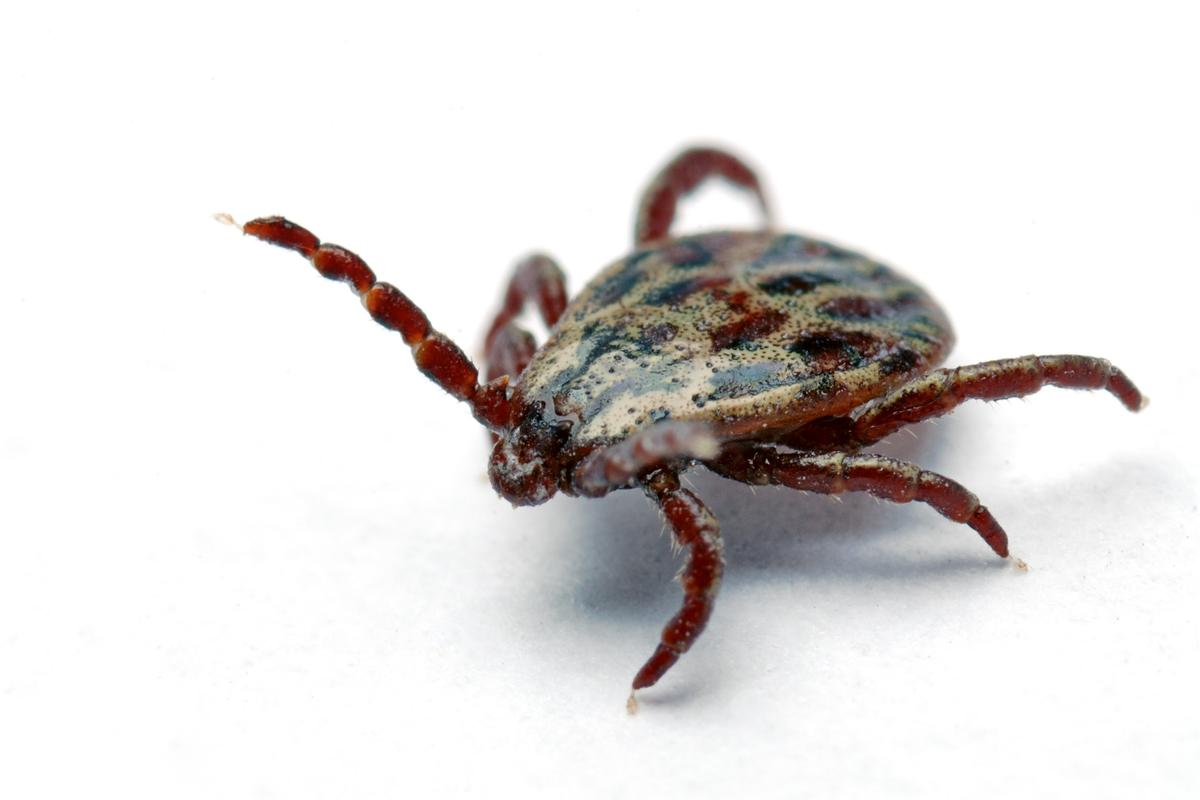 The new insecticide uses nanoparticles to kill ticks, with minimal harm to the environment