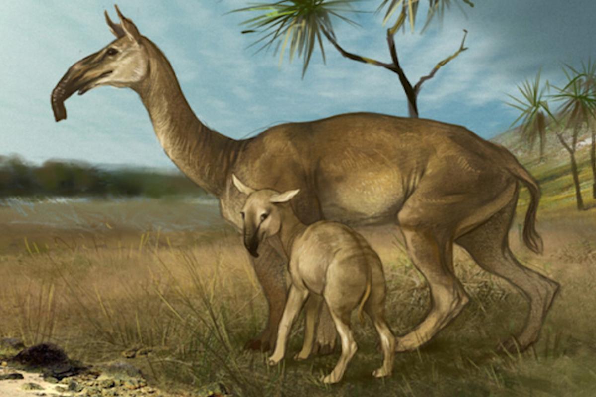Darwin's dilemma: Bizarre ancient animal identified through DNA