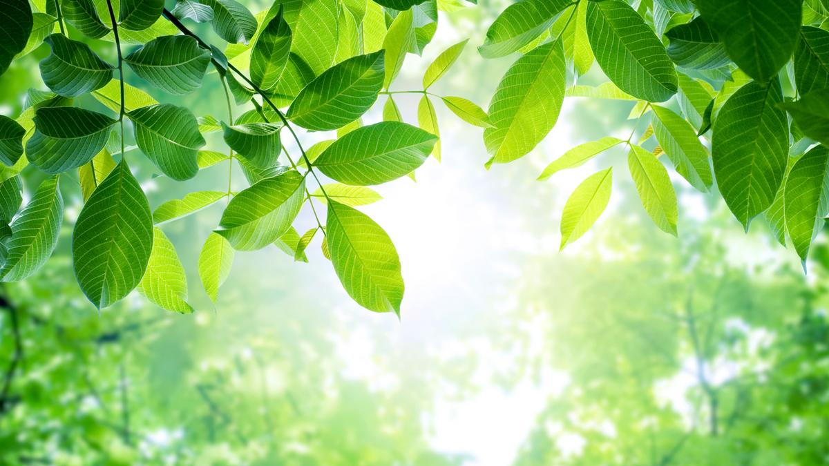Researchers have developed an artificial photosynthesis technology that could be a win/win for the environment (Photo: Shutterstock)