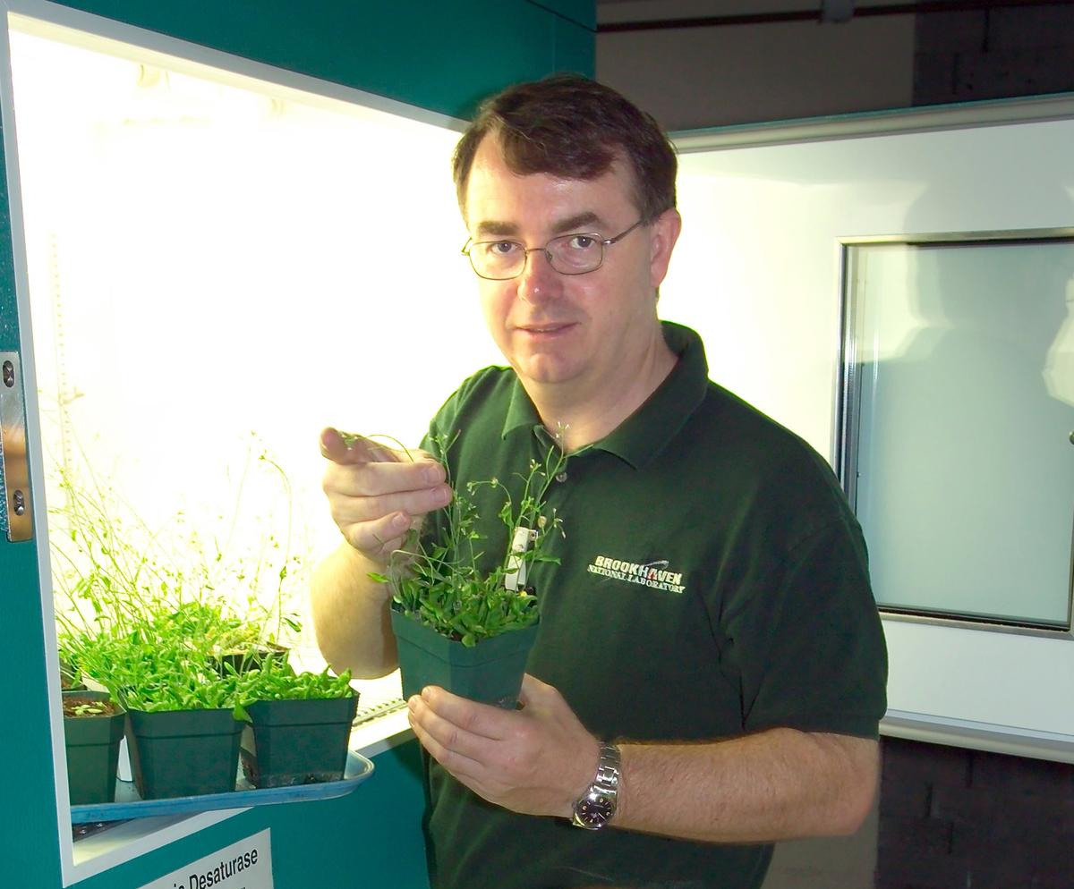 John Shanklin with the engineered plastics feedstock species Arabidopsis