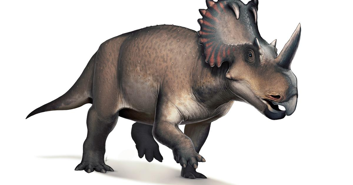 Dinosaur diagnosed with late-stage cancer in first-of-its-kind study