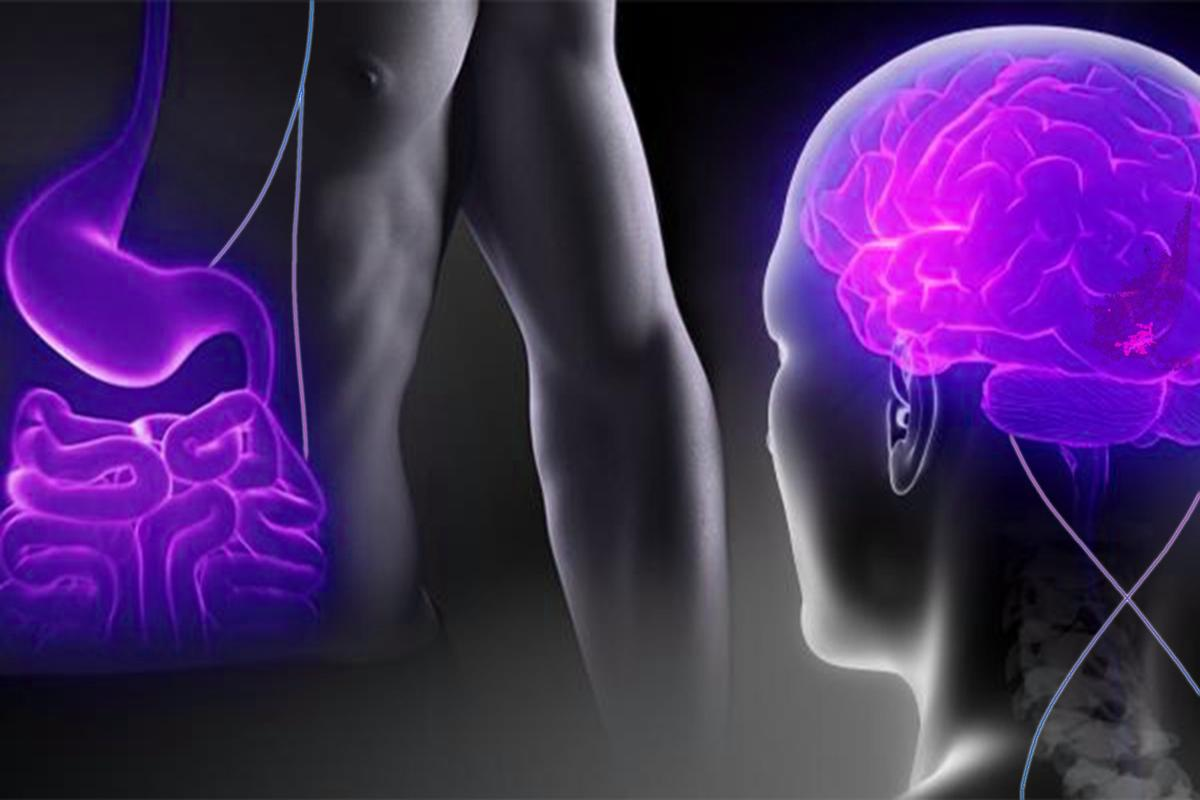 Experiments have shown how the stomach sends messages to the brain to keep eating or stop depending on the calorie content of the food consumed