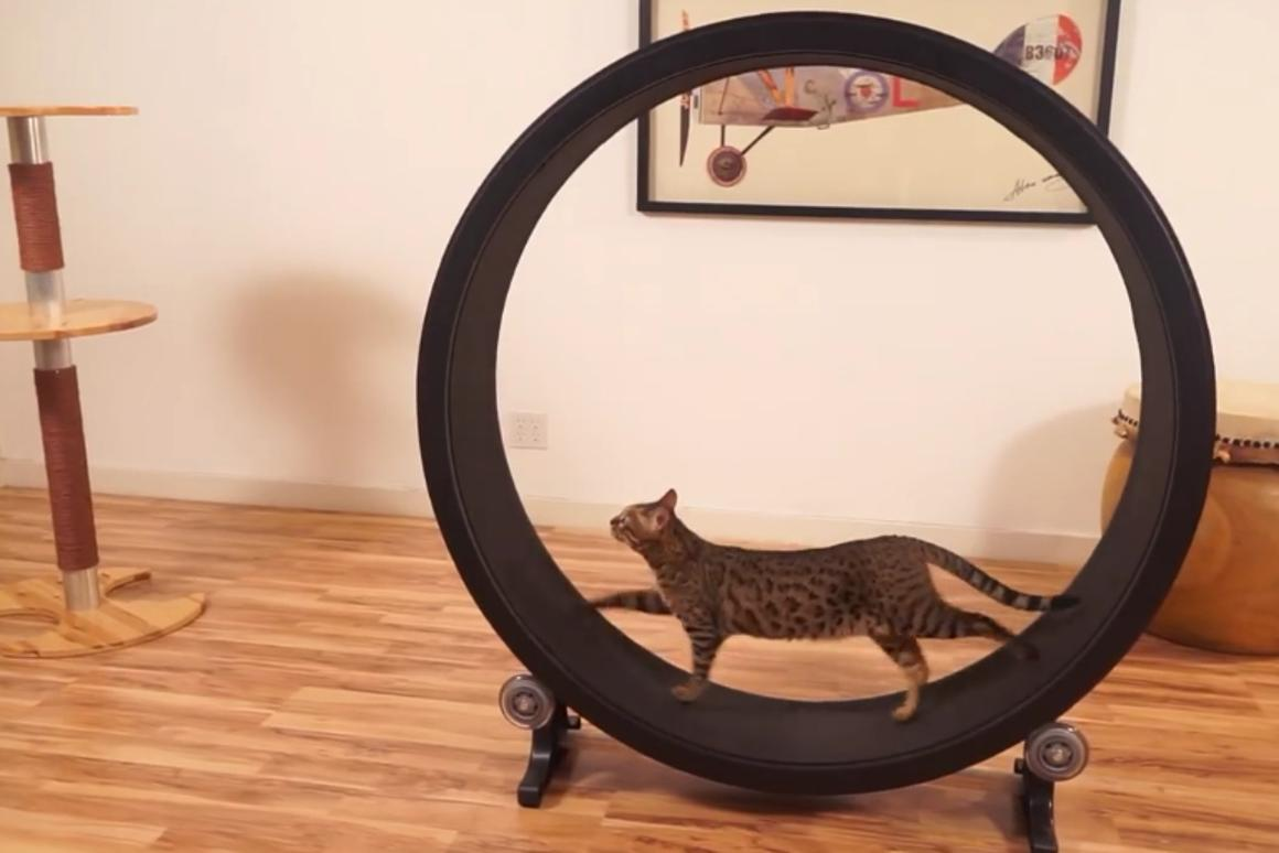 One Fast Cat is an exercise wheel for your feline friends