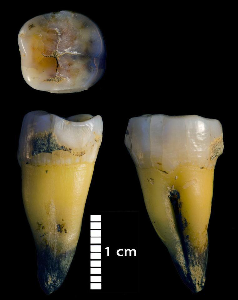 Modern human molars found in Bacho Kiro Cave in Bulgaria