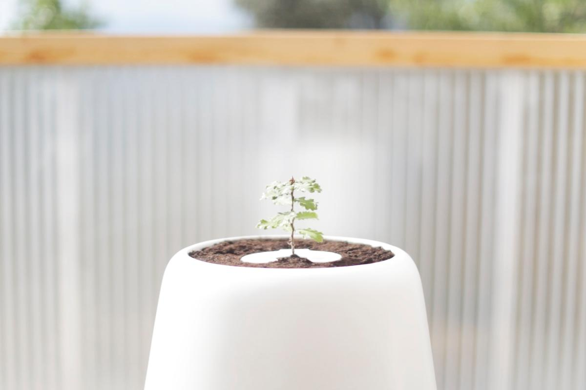 The Bios Incube is an incubator for the Bios Urn, a biodegradable urn that uses a person's ashes to help grow a tree after their death