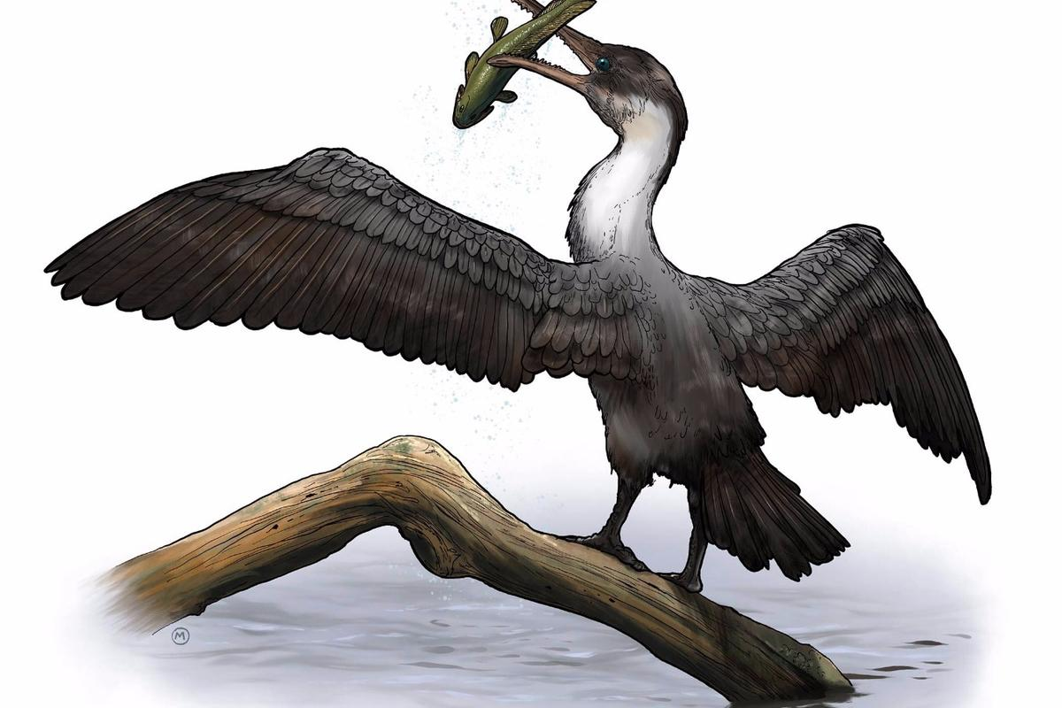 The fossilized remains of Tingmiatornis arctica date from the Turonian age of the Cretaceous period about 93.9 to 89.8 million years ago