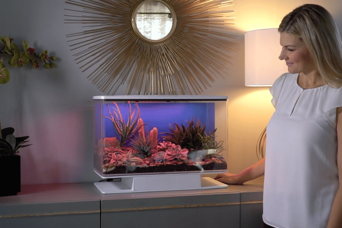 The SmartTerra is an app-controlled terrarium loaded with lights, speakers and a water system that can simulate sunsets, rainstorms and other sound and light shows