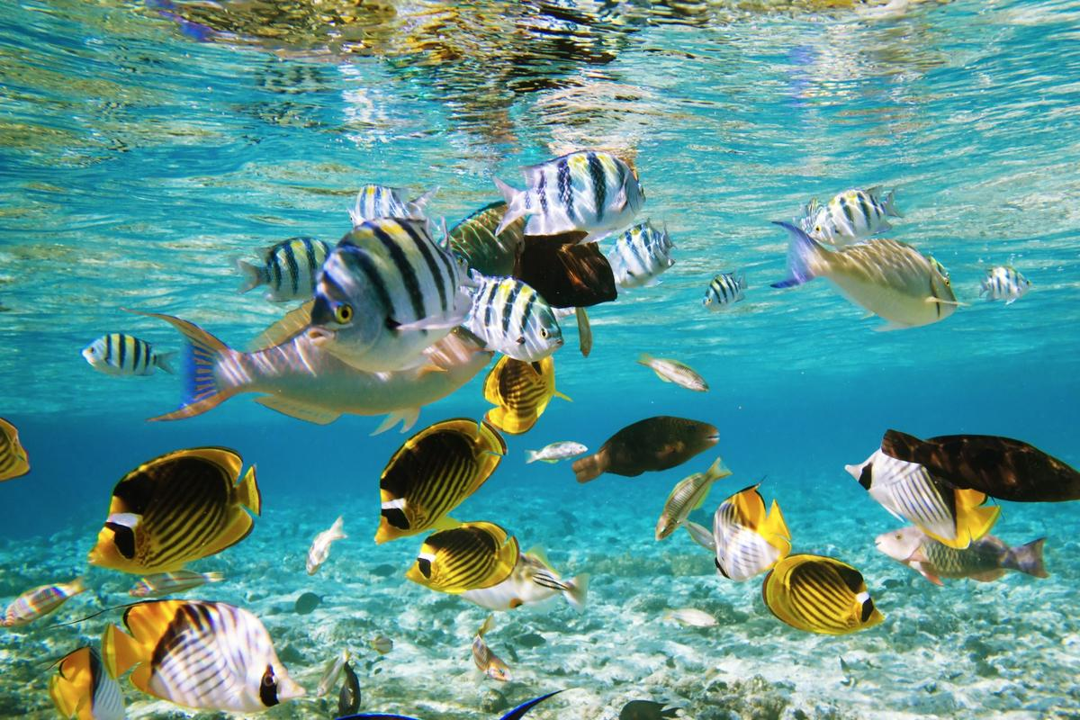 Carbon dioxide can make fish do some strange things