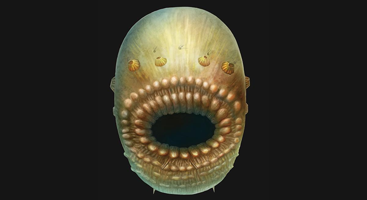 Hi mom!An artist's impression ofSaccorhytus coronarius, a tiny sea creature that may be a common ancestor to many species on Earth