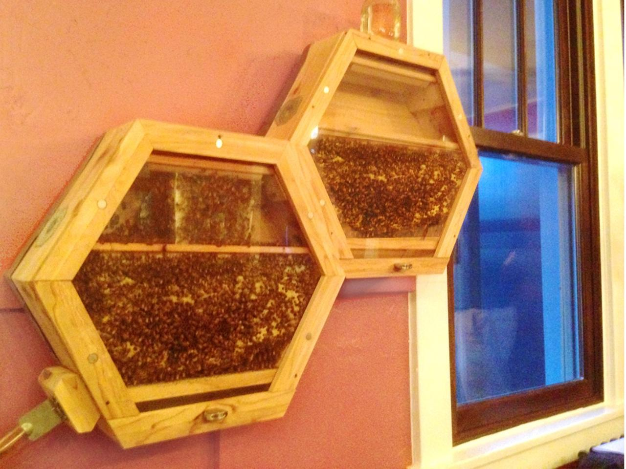 The BEEcosystem has been designed to be modular so that more hives can be added as the colony grows