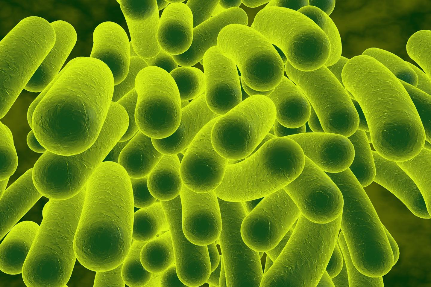 Researchers have found a way to counter the evolutionary catalyst that lets bacteria become resistant to antibiotics