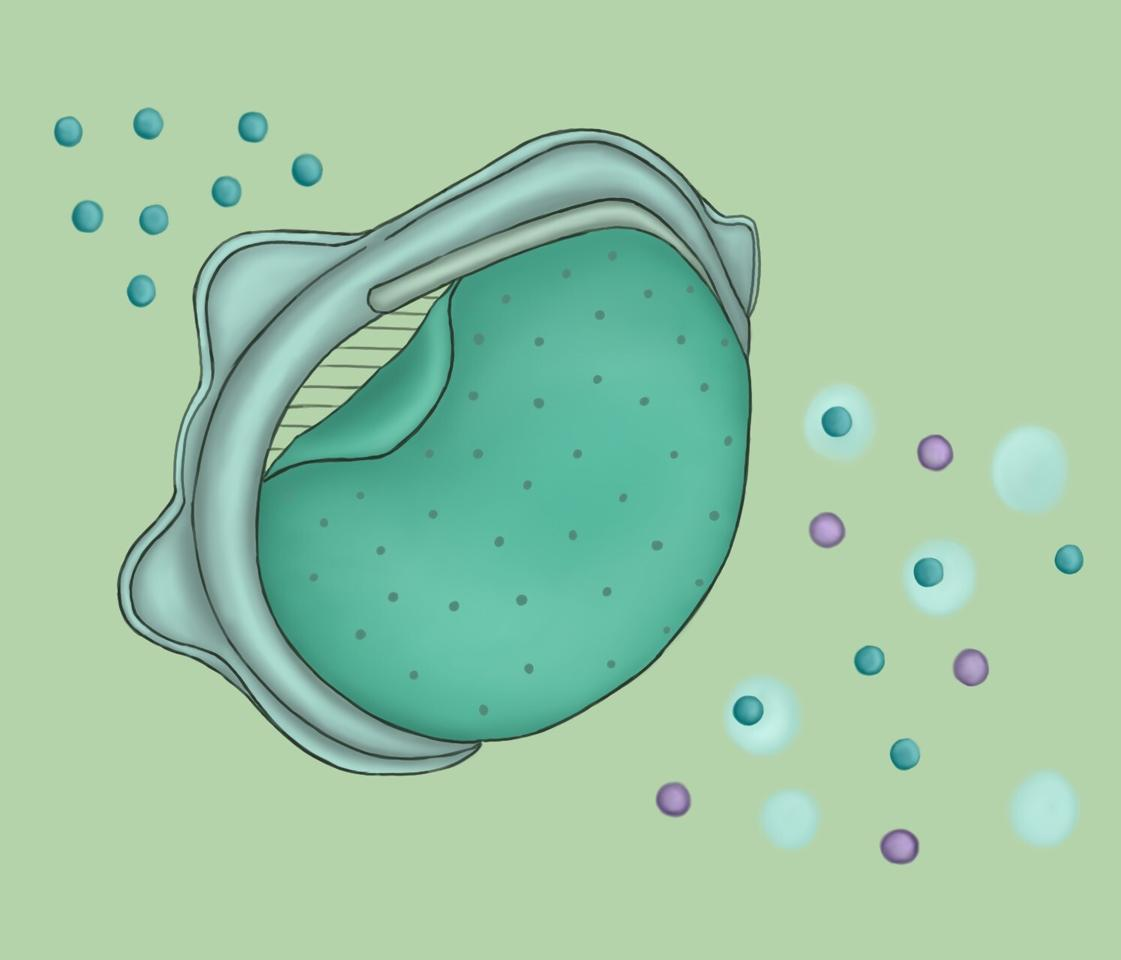An illustration shows how the nanoporous membrane is made to filter out particles the size of SARS-CoV-2 (purple), allowing only clean air (blue) through