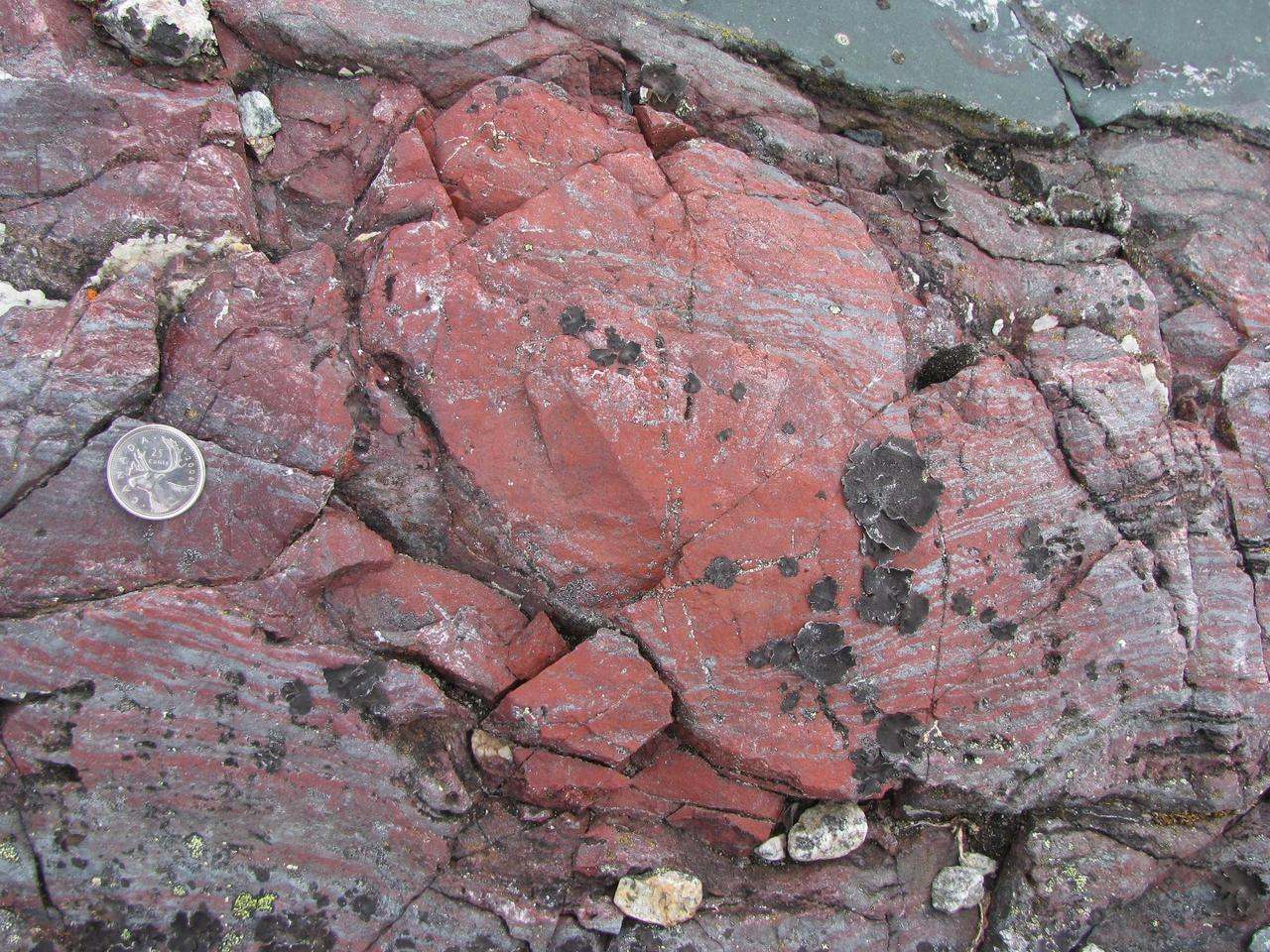 The haematitic chert (an iron- and silica-rich rock) seen here contains tubular and filament-like microfossils