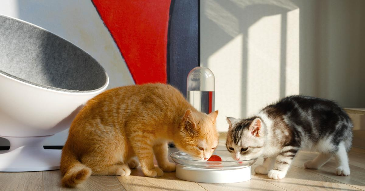 KittySpring fountain keeps your cat's water supply full and fresh