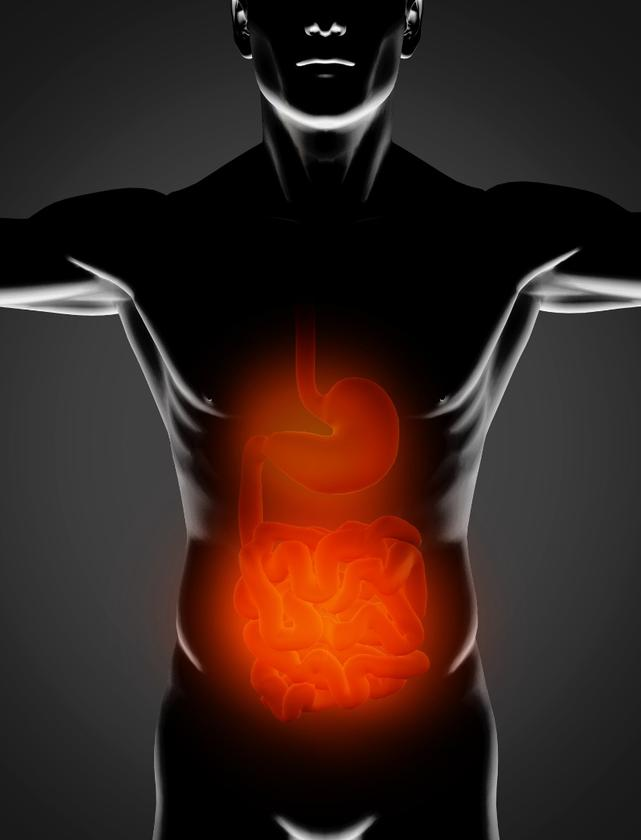 A study in mice has revealed the role bacteria play in enhancing the body's ability to absorb fat