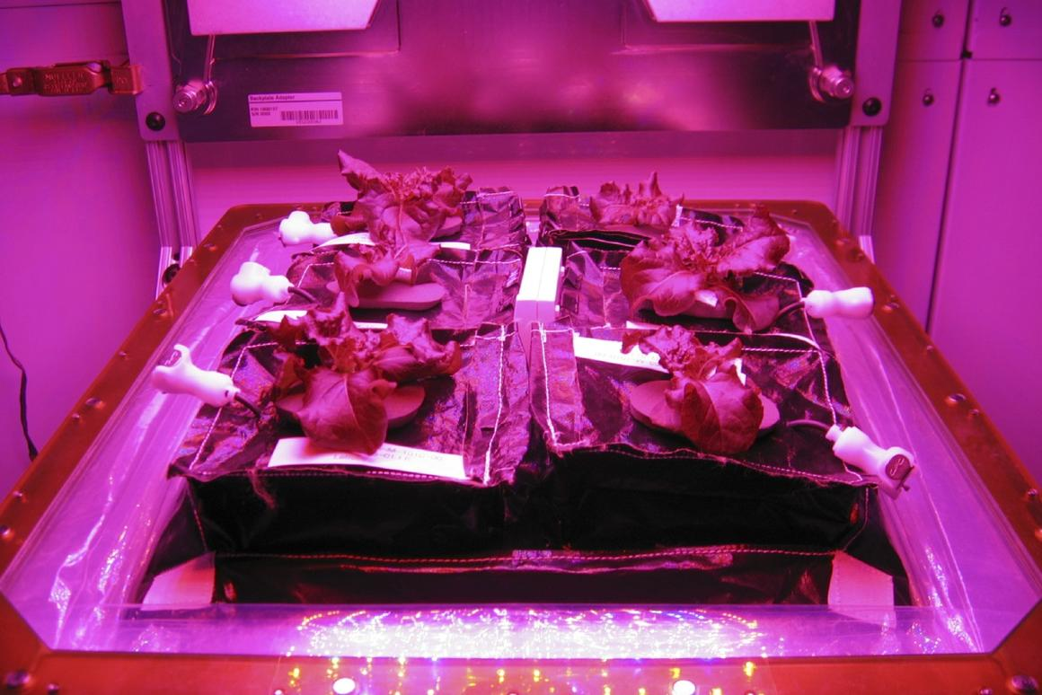 A growing tray in the Vegetable Production System (Veggie) that is headed to the ISS (Photo: NASA)