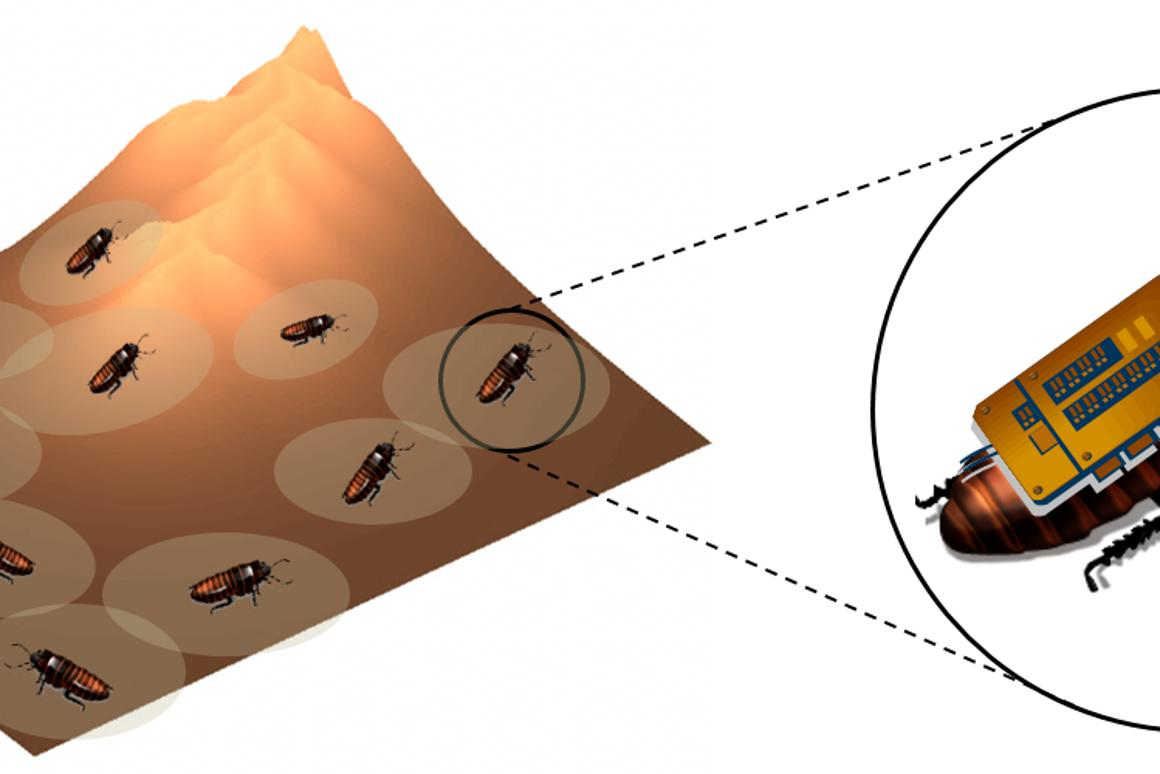 Swarms of remote-control cockroaches could be used to map hazardous environments for first responders