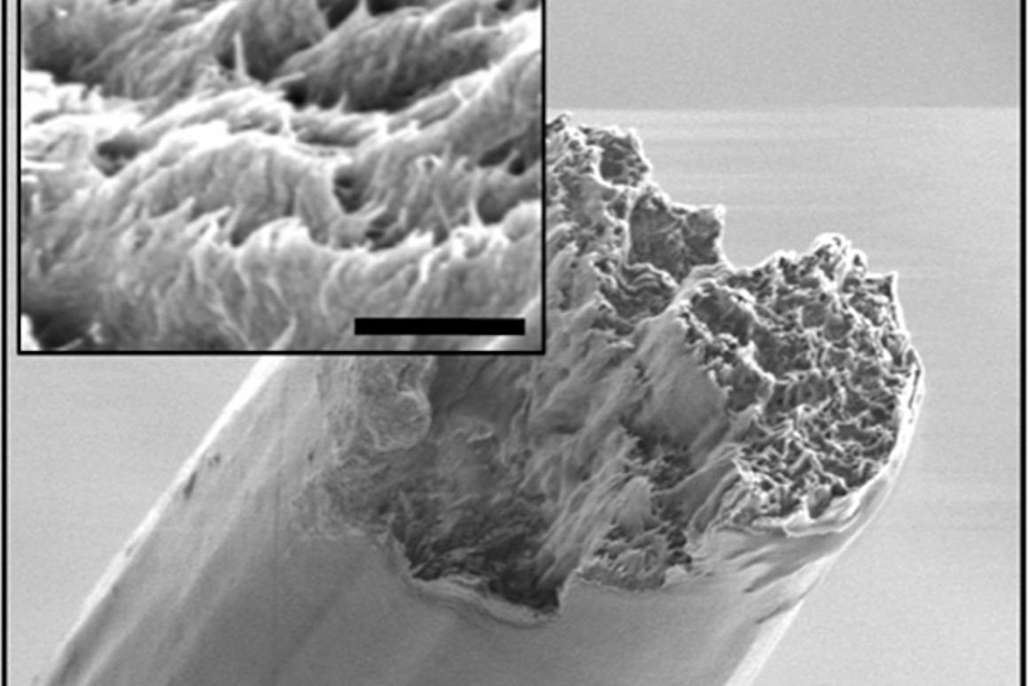 A scanning electron microscope image of the cellulose nanofiber material, derived from wood, which is now the strongest biomaterial ever made