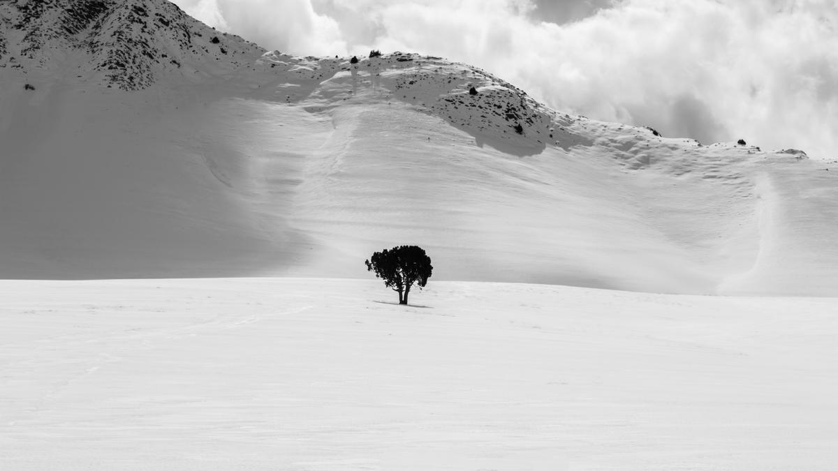 """This image is described by the photographer, """"Once a month I'm passing from near this tree.I had captured a few picture from this, but after a whole week ofsnow there is a dazzling scenery to capture this."""""""
