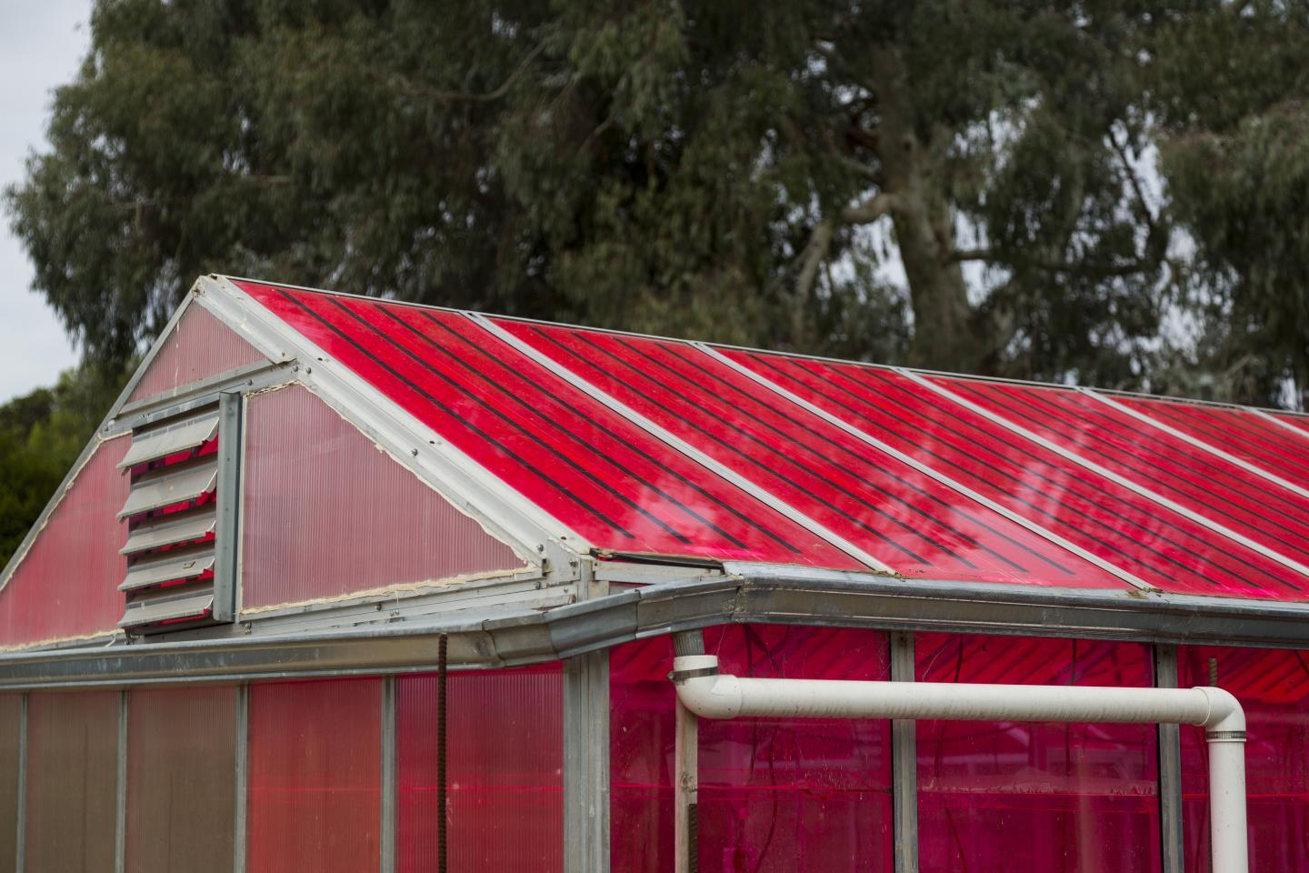 The WSPVs technology reportedly didn't interfere with plant growth or production