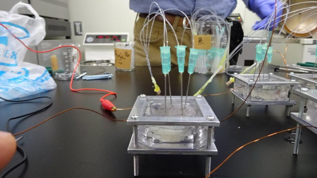 One of the units containing the electricity-generating organ from the torpedo fish, with syringes that inject acetylcholine to stimulate it