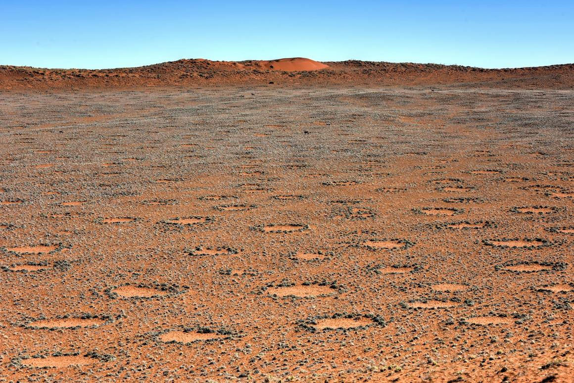 "Researchers at Princeton have solved the mystery of how ""fairy circles"" are formed in the Namib Desert"