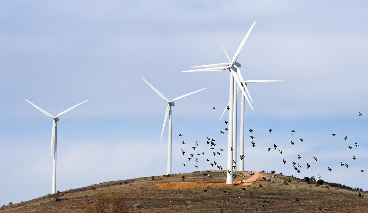 Would partly black turbines be safer for birds? (Photo: Shutterstock)