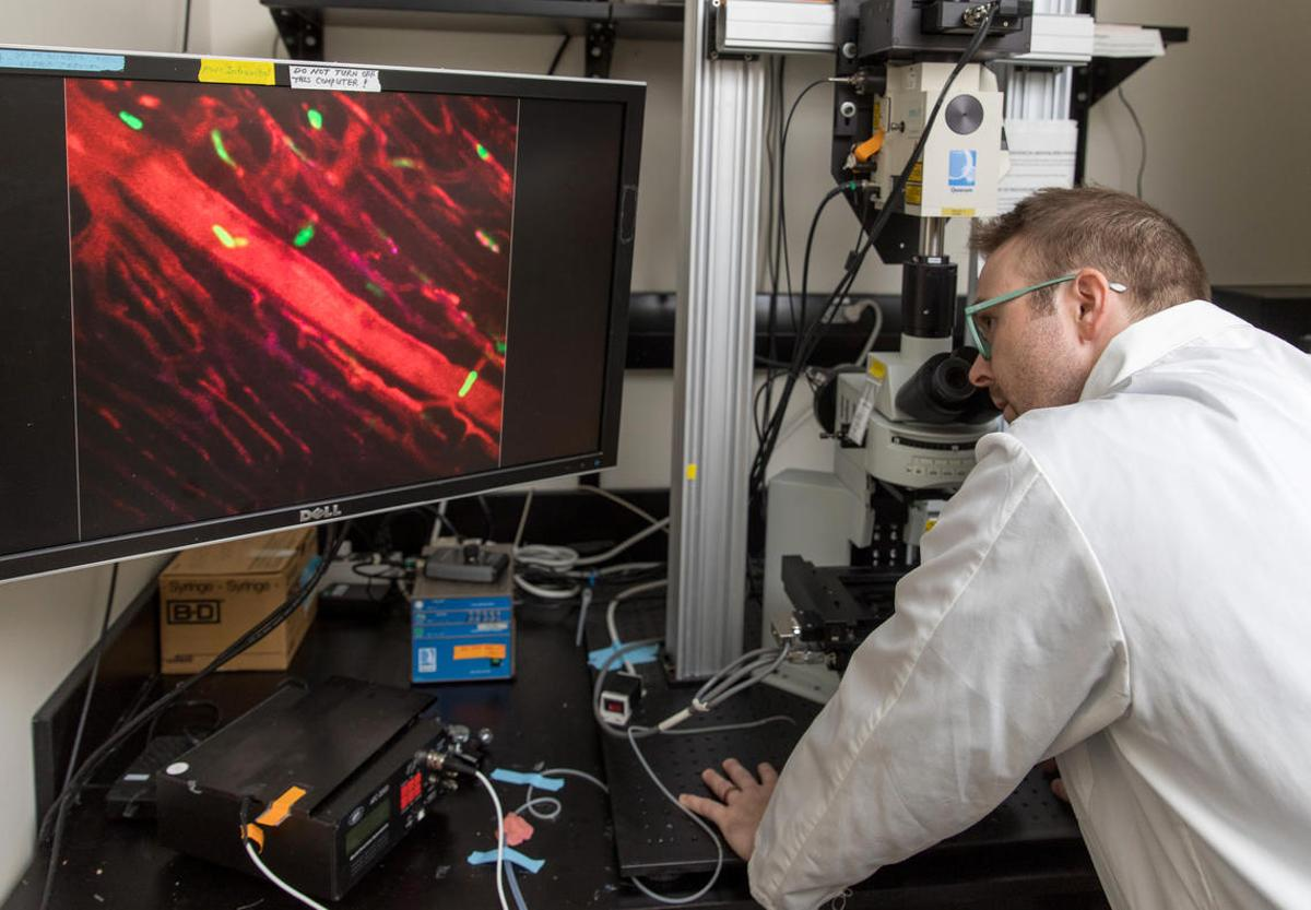 Researcher Justin Deniset using live imagingmicroscopy to watch pericardial cells
