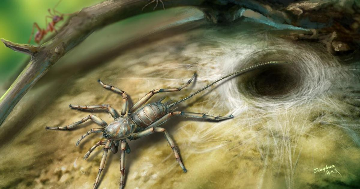 Ancient spider with a tail found preserved in amber