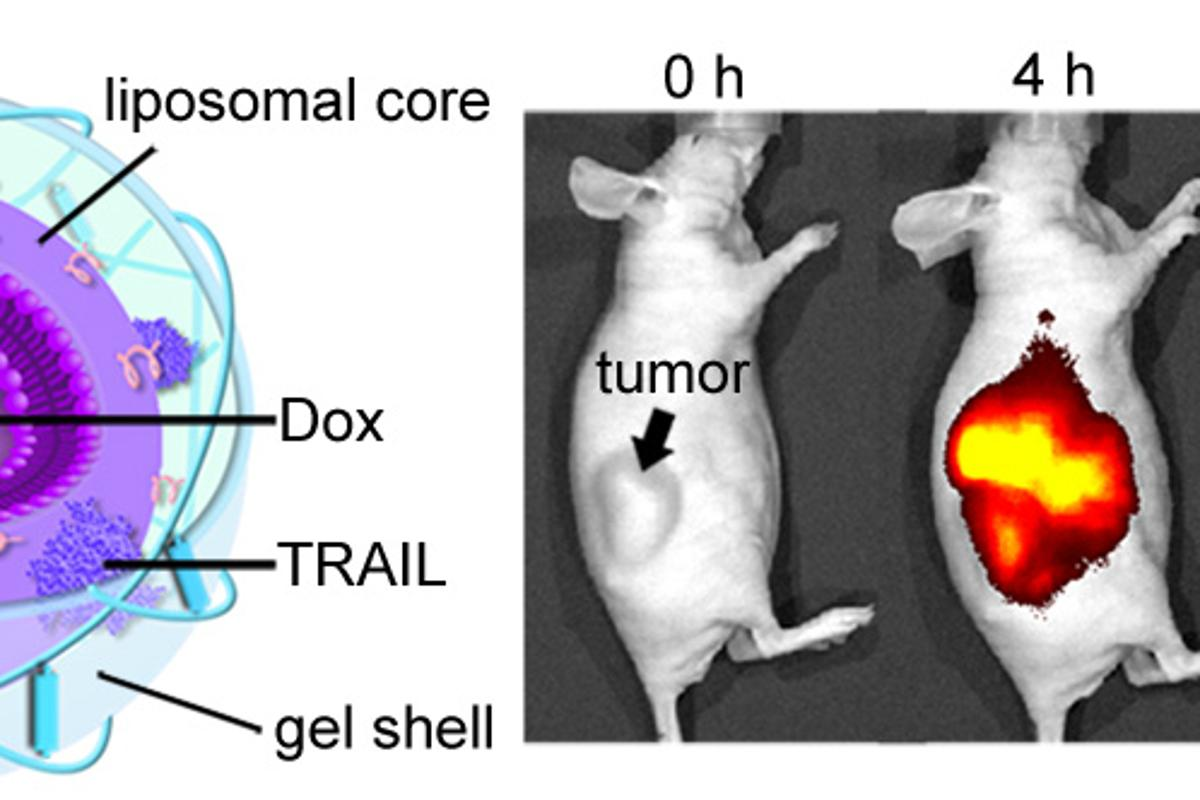 A nanoparticle delivery mechanism (left) treats tumors in mice more effectively