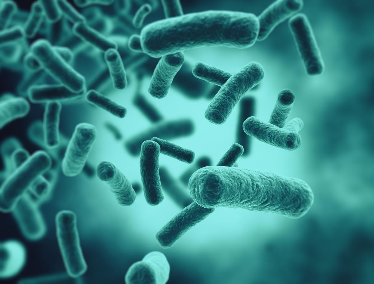 Researchers have discovered how a nasty strain of bacteria blocks antibiotics