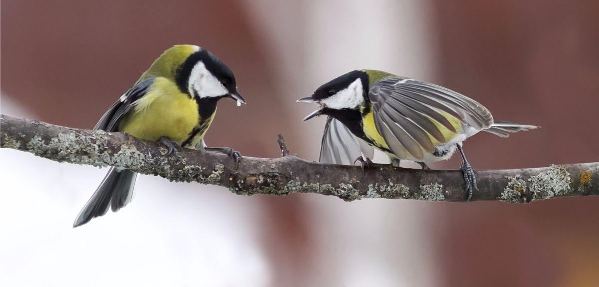 The researchers studied the social network structure of a population of wild great tits across six breeding seasons