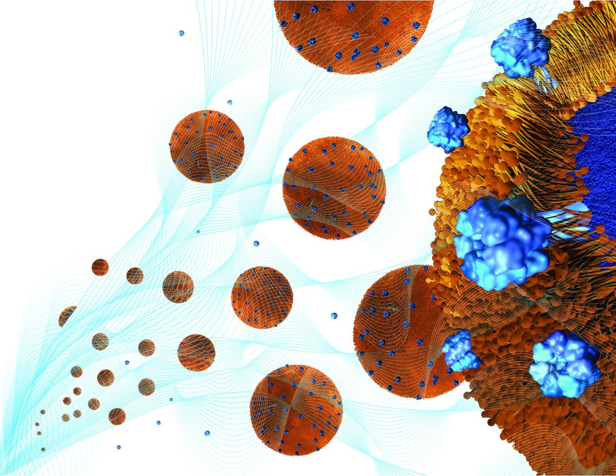 Toxin-absorbing nanoparticles are loaded into a holding gel to make a nanosponge-hydrogel, which can potentially treat local bacterial infections