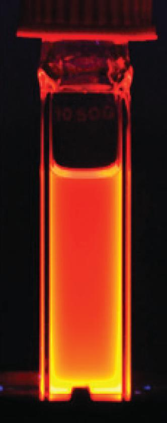A solution of cadmium-selenide quantum dots glows orange under ultraviolet light. This luminescence forms the basis for their use in bioimaging (Image: University at Buffalo)