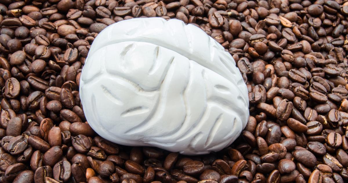 Caffeine consumption found to alter brain structure