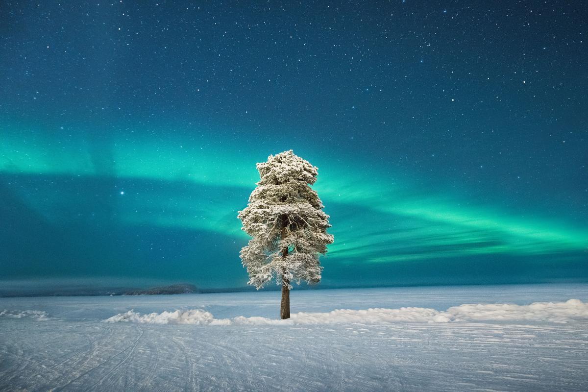 Runner Up - Aurorae. Lone Tree under a Scandinavian Aurora.