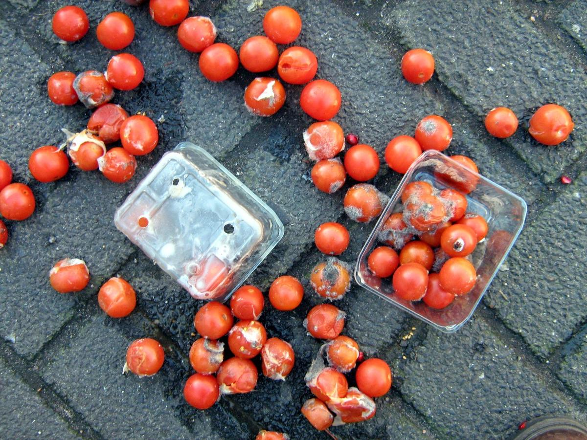 """Damaged tomatoes that are unsuitable for sale at the grocery store found to be """"a particularly powerful source of energy"""" by US researchers"""